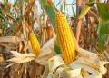 Foto: Reprodução Agro Bayer