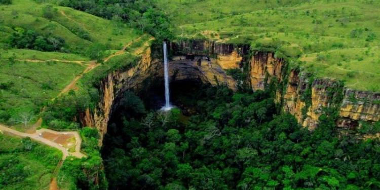 Cerrado é a savana mais biodiversa do mundo e se originou há pelo menos 40 milhões de anos