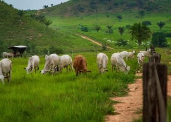 Pastagem em São Félix do Xingu, o município com maior rebanho bovino do país. Foto: Marcio Isensee e Sá.