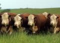 Carne bovina está impedida de entrar na China há seis semanas